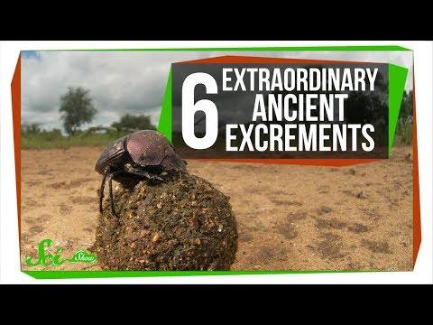 Xxx Mp4 6 Extraordinary Ancient Excrements 3gp Sex