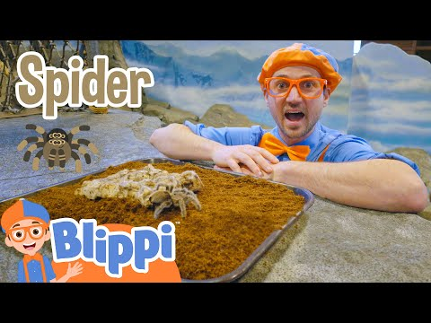 Blippi Visits The Zoo Learning Animals For Kids Educational Videos For Children