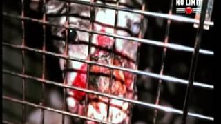 pitbull combat de chien terrifiant!!!