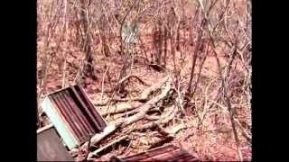 Abelhas transferidas do Piauí para interior do Maranhão por causa da seca