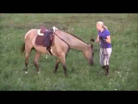 Xxx Mp4 Horse Sexy Love With Beautiful Owner Girl 3gp Sex