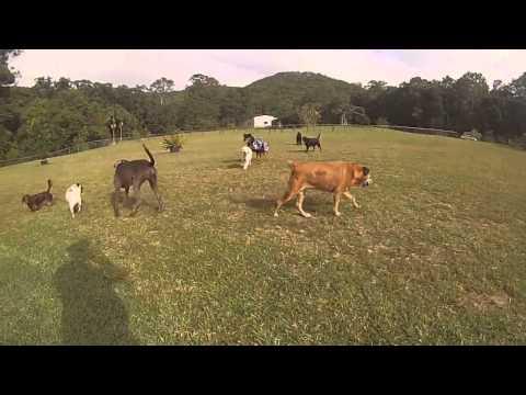 Xxx Mp4 Xxx Buderim Dog Walking Service NINE DOGS 3gp Sex