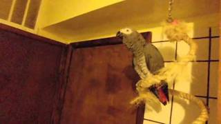 Parrot with Skill (Santos)