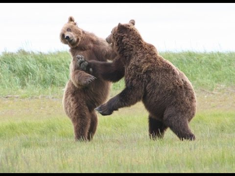 documentary discovery - Brown Bears - documentaries 2014