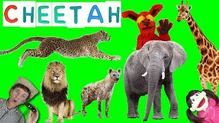 First Words #11 CHEETAH | Learning 6 WILD ANIMALS | Learn English Kids Matt VS Cheetah