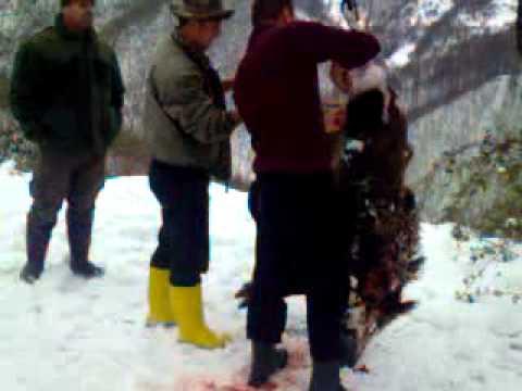 Gjuetia jezercit papaz 26.12.2011