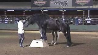 Dancing Horse Show Liberty Horses CA State Fair