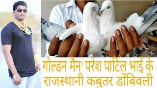 GOLDEN MAN PARESH PATIL BHAI KE DESI PIGEON.DOMBIVALI MUMBAI MAHARASTR