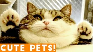 Best Cute Pets of the Week Compilation ft. Dogs & Cats | Try Not to Laugh Funny Pet Videos FPV 2018