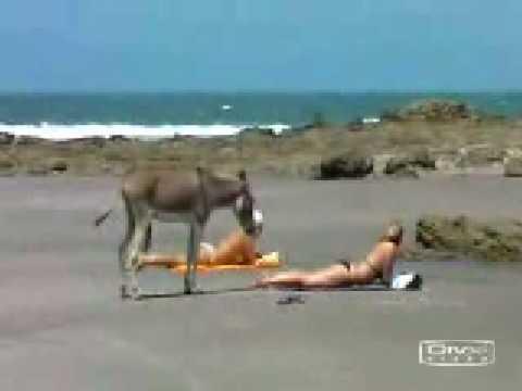 horney donkey does also like beautiful girls