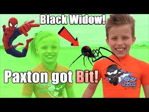 Xxx Mp4 Paxton Got Bit By A BLACK WIDOW HE Is SPIDERMAN 3gp Sex