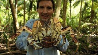 British Indian Ocean Territory – coconut crabs