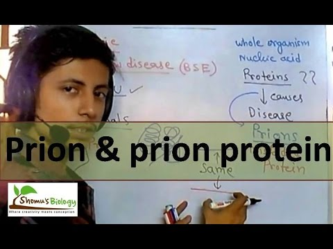 Prion protein and prion disease