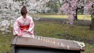 さくら(Sakura) 25絃箏 (25 strings koto)