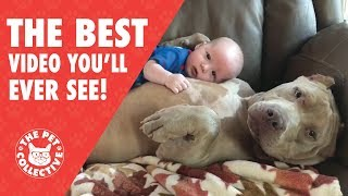 The Best Video You'll Ever See | Animal Hugs!
