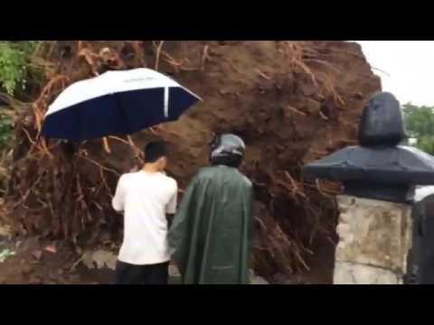 "Pohon beringin alun"" purbalingga roboh kena hujan badai angin"