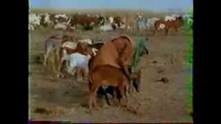 Ahmadou Hampaté Ba 2e video
