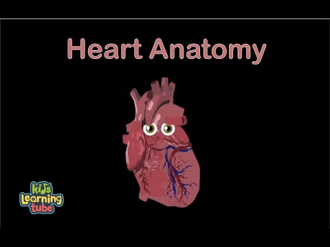 The Human Body for Kids/Learn about