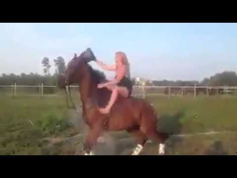 Girl sitting on the horse Ice Challenge.MP4