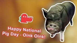 Happy National Pig Day: Funniest Pig Videos, Clips & Compilation