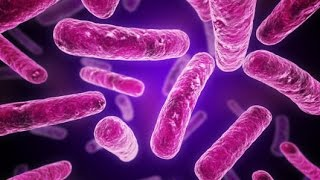 Gram Positive vs. Gram Negative Bacterial Cell Wall Structure (Microbiology)
