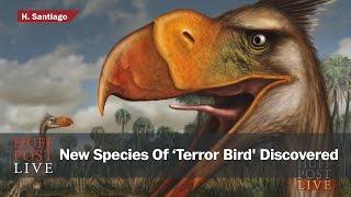 New Species Of 'Terror Bird' Discovered