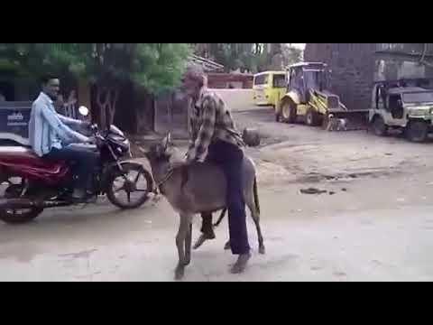 Xxx Mp4 Donkey Mating 3gp Sex