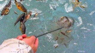 как поймать рыбу на яме