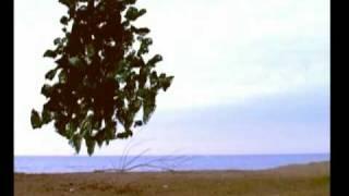 My Tree (award winning short film)