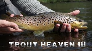 Trout Heaven III - The Final Chapter