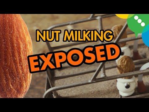 Xxx Mp4 Nut Milking EXPOSED 3gp Sex