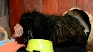 Rescue of Bóbita -  FAPF (Foundation of Animal Protection in Füzesabony) Hungary