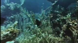 BARRACUDA (1978) Trailer GERMAN