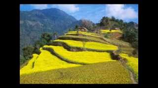 nepali old songs collection