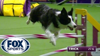 Watch Border Collie, Trick, Win 2017 Masters Agility Championship | FOX SPORTS
