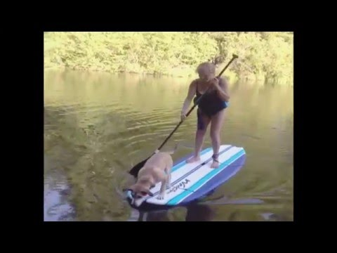 Xxx Mp4 Dog Causes Woman To Fall Off Of Paddleboard 3gp Sex