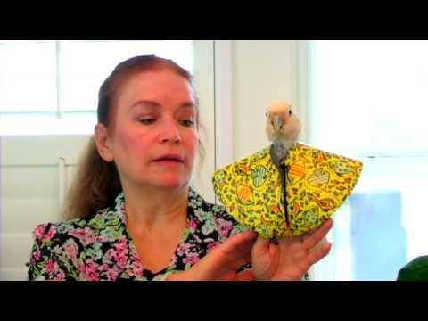Xxx Mp4 Bird Care How To Treat A Sick Parrot 3gp Sex