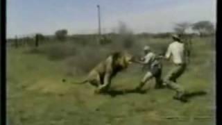 caza mayor: cazando leones