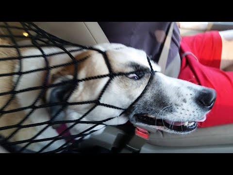FailFactory Derpy Dogs March 2019 FailArmy