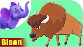 Bison - Animal Rhymes in Ultra HD (4K)