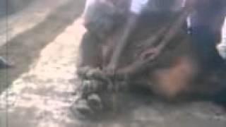 Goru kurbani-2012.3gp...