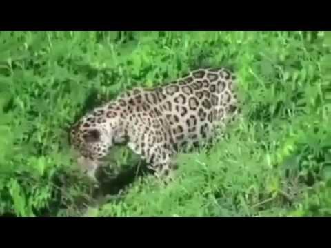 Omg  o Heavy Attack  o   Discover Nature   Wildlife Animals240p
