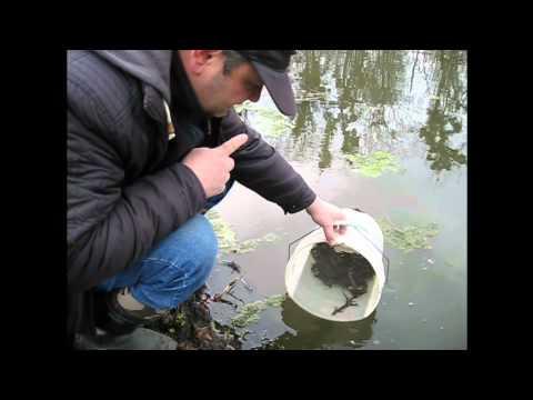 видео о ловле налима и вьюна