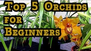 ORCHID CARE :  TOP 5 Orchids for Beginners and Tips to BLOOM Them.