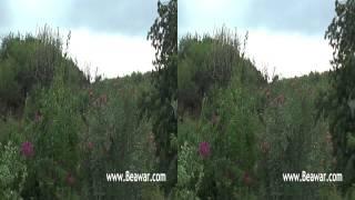 नीलकंठ महादेव, ब्यावर - विडियो-3 3D में