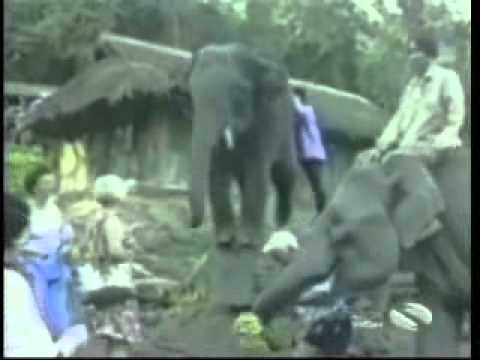Animal Thieves - Desi Video Network