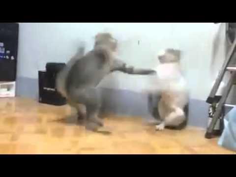 Xxx Mp4 Funny Video Com 3gp Sex