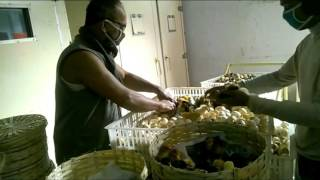poultry farm in bangladesh