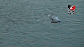 انتشال جثة «غريق مجهول» من النيل