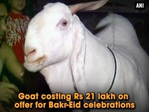Goat costing Rs 21 lakh on offer for Bakr Eid celebrations ANI News